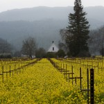 Napa Valley in Winter