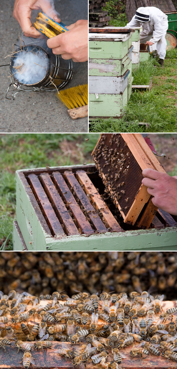 Bee-Keeping and Honey-Farming at Marshall's Honey Farm